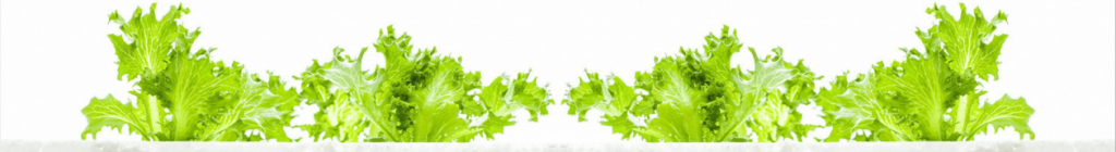 hydroponic leaves