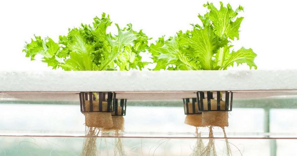 growing with hydroponics