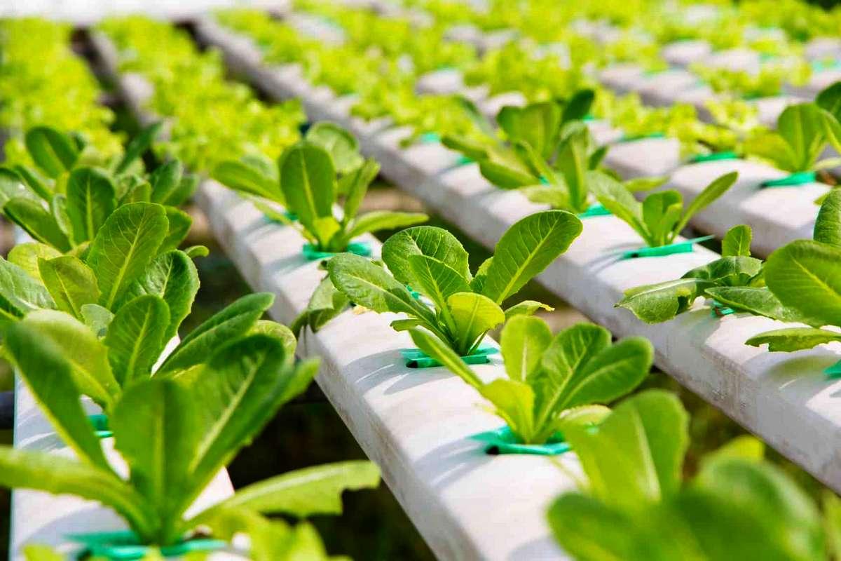 raised hydroponics