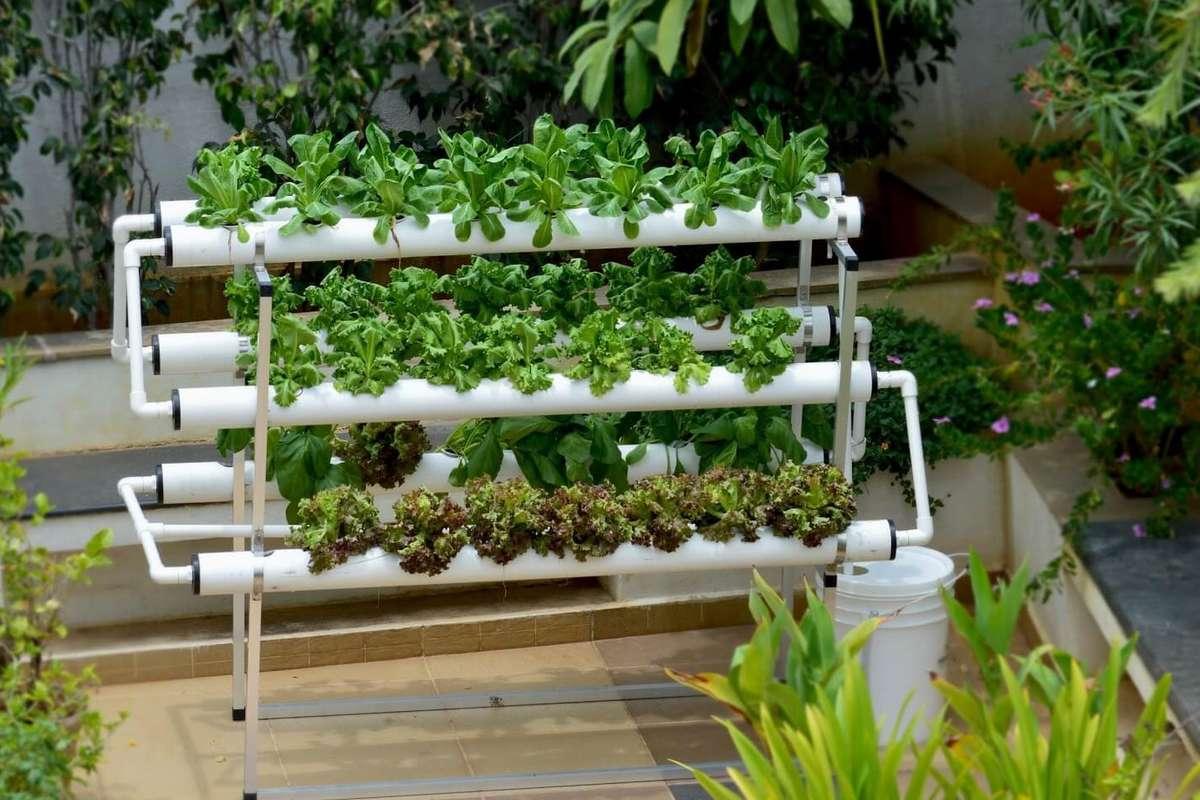 simple hydroponics